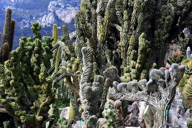 Giardino esotico Monaco