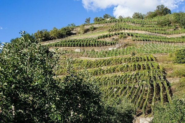 Terrazzamenti vitati Valtellina